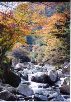須雲川の紅葉